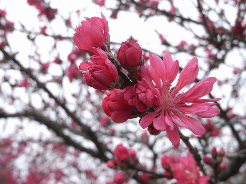 春の花々@明日香村-36