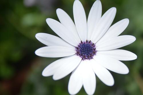 من معرض زهور الربيع بحديقة الاورمان From Spring Flowers Fair 2011 by أحمد عبد الفتاح Ahmed Abd El-fatah