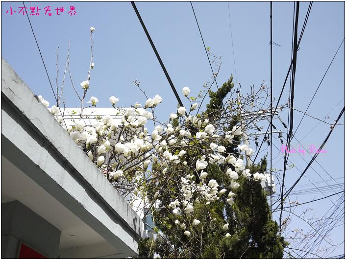 合井皇甫的店(弘大) (8).jpg