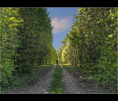 Mattino di primavera / Spring morning (Fil.ippo) Tags: forastico filippo spring primavera green greenery prato alberi trees d5000 brianza filippobianchi