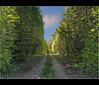 Mattino di primavera / Spring morning (Fil.ippo) Tags: trees green primavera alberi spring greenery prato brianza filippo d5000 forastico