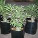 Bonsai Plants 2