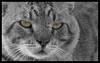 Den farlige agurke- kat SH beskåret