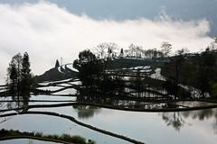 Yuanyang Terraced Fields (+Lanzi) Tags: terrace fields yunnan hani yuanyang terraced