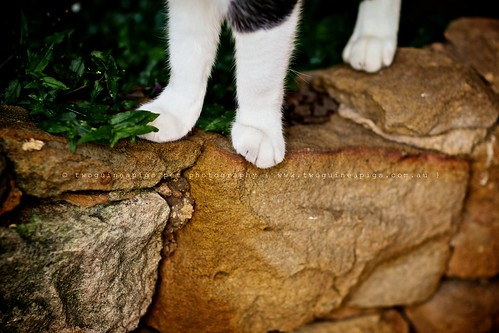Paws of a street cat by twoguineapigs pet photography