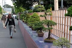 第27回 大盆栽祭り (2010)