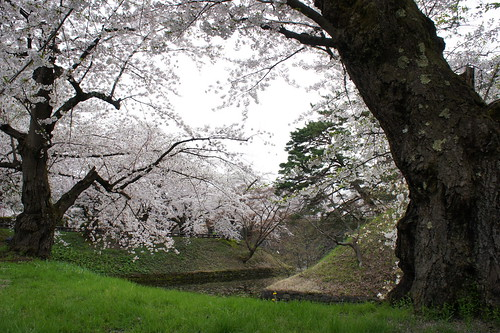the moat near Hirosaki Castle