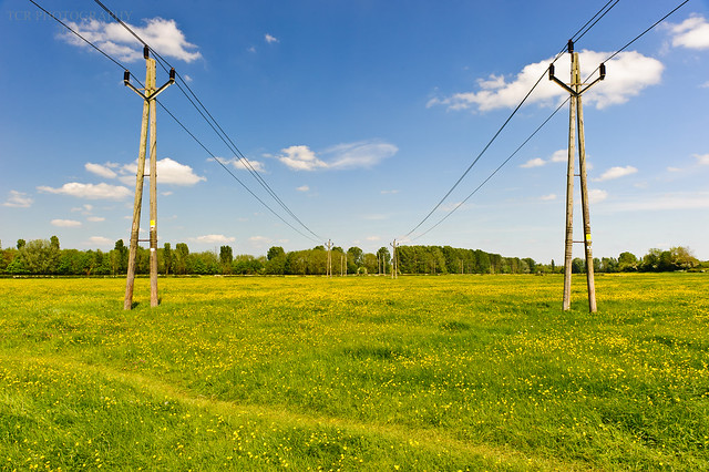 Symetrical electricty pylons running through a yellow buttercup meadow.