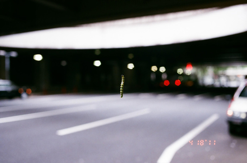 caterpillar_22