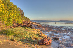 Long Reef in Morning Light (TheGreatContini) Tags: ocean flowers water beautiful landscape rocks pacific sydney reserve australia cliffs shallow longreef northernbeaches
