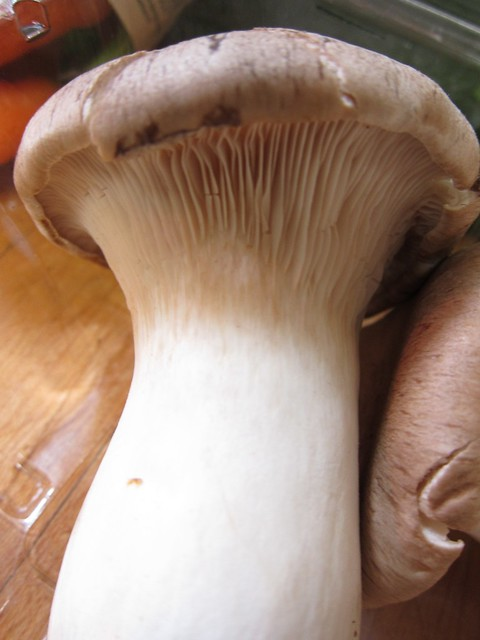 CSA Mushrooms