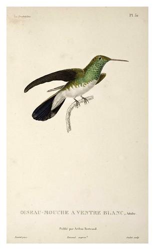 025-Les Trochilidées ou les Colibris et les Oiseaux-Mouches… 1832- René Primevère Lesson- DGZ–Göttinger Digitalisierungszentrum