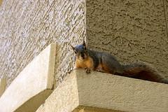 144/365: The Most Interesting Thing... (Tori Lesikar Photography) Tags: squirrel wildlife nuts selenagomez justinbeiber