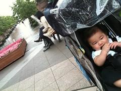 雨のYGP