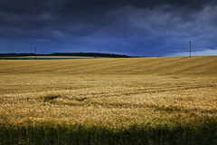 Black And Gold (mark_mullen) Tags: sky storm field barley rural canon landscape countryside day gloomy farm wheat farming stormy crops 1ds northyorkshire darkskies wolds blackandgold butterwick 24105f4is markmullen markmullenphotography