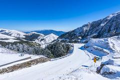 Harry_30981,,,,,,,,,,,,,,,,,,,Winter,Snow,Hehuan Mountain,Taroko National Park,National Park (HarryTaiwan) Tags:                   winter snow hehuanmountain tarokonationalpark nationalpark     harryhuang   taiwan nikon d800 hgf78354ms35hinetnet adobergb  nantou mountain