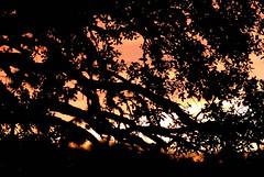 _DSC0004e ~ Sunset (BDC Photography) Tags: pipecreek tx usa nikondslrcamera nikond200 nikon nikonafnikkor180mmf28difedlens bwfpro72mmuvhaze1xfilter cloudsstormssunsetssunrises