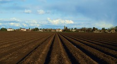 Davis (al-absi) Tags: california ca brown field lines clouds woodland town farm country olympus soil davis ucd winters     1442mm   e620
