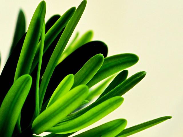 IMG_1739 绿色植物,Green plant ,nature