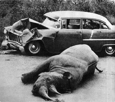 animals_attacking_cars_24
