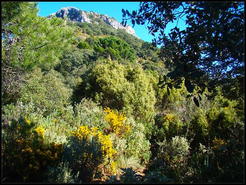 Pico de la cruz de Juanar