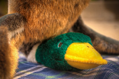 How To Make A Down Feathered Pillow by hbmike2000