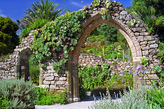Tresco Abbey Gardens, Scilly Isles, UK | Ruined abbey arch covered in plants in this superb sub-tropical garden (1 of 12) (ukgardenphotos) Tags: uk summer wallpaper england english abbey gardens garden screensaver foliage f80 subtropical picturesque isles succulents provia100f scilly tresco islesofscilly abbeygardens englishgardens historicgardens aloes englishsummer agaves scillyisles abbeyruins gardenfoliage subtropicalgarden islandgardens aeoniums picturepostcard calendarphotos calendarshots ruinedabbey strelitzias echiums trescoabbeygardens geo:country=unitedkingdom trescoabbey echia abbeyarch mediterraneangardens trescogardens interestingfoliage subtropicalgardens architecturalplants subtropicalplants picturesquegarden architecturalplanting gardencalendar mygardenschool geo:city=tresco geo:lat=49947502 geo:lon=6330205 geo:zip=tr240qq greentapestry