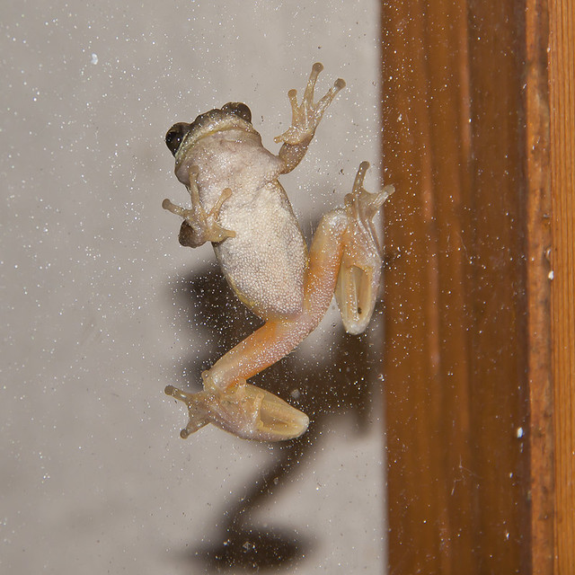 frogs_2011_20141
