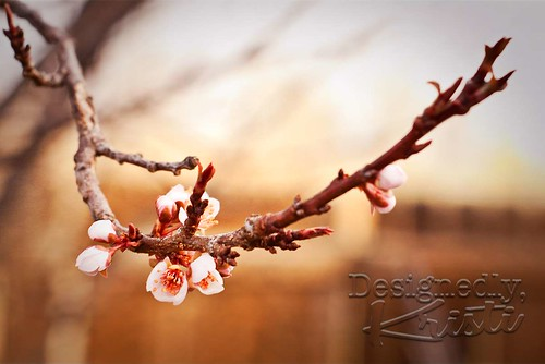 Very First Plum Blossoms