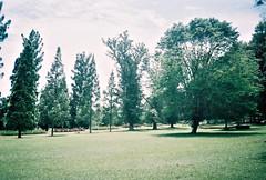 (yttria.ariwahjoedi) Tags: tree green film nature grass analog landscape nikon superia meadow 200 raya bogor kebun fujicolor af230
