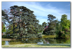 Jardin dans le parc de Saint-Cloud (afer92 (on and off)) Tags: tree water spring jardin cedar avril arbre parc printemps hdr tang saintcloud 2011 cdre 4538