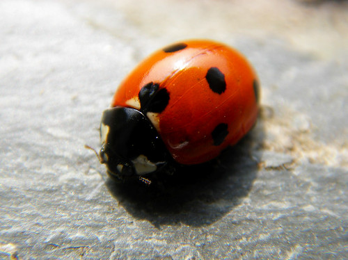 Day 311 - Ladybird!