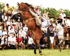 Diego Casas (Eduardo Amorim) Tags: brazil horses horse southamerica brasil caballo cheval caballos cavalos pelotas pferde cavalli cavallo cavalo gauchos pferd riograndedosul pampa hest hevonen campanha brsil chevaux gaucho  amricadosul hst gacho  campero amriquedusud  gachos  sudamrica suramrica amricadelsur  sdamerika jineteada   costadoce camperos americadelsud gineteada  americameridionale campeiros campeiro eduardoamorim iayayam yamaiay