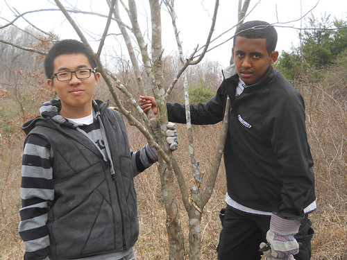 Volunteers helping with invasive species removal & tree planting
