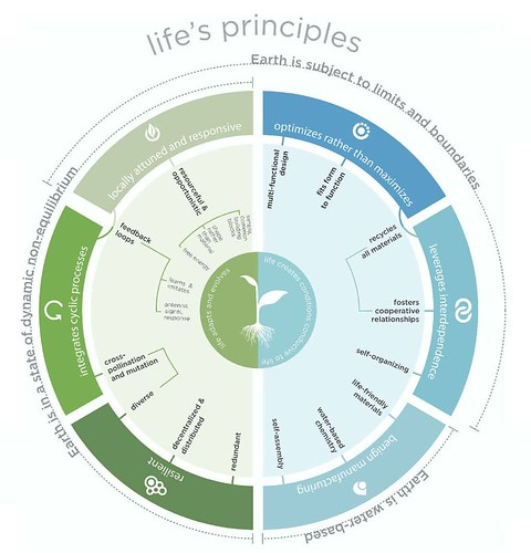 HOK Life's principles, applicable to design, graphic