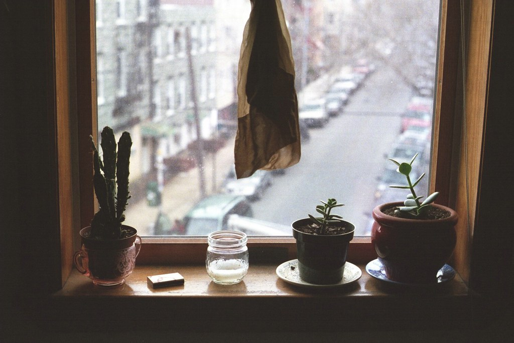 Great Windowsills I Have Known