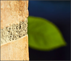 hide and seek (_esse_) Tags: blue orange verde green wall countryside leaf blu db campagna foglia arancione 100macro daino eos5d fontanelice nascondaino perpiccinachetusia