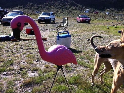 Dakota vs. the Pink Flamingo