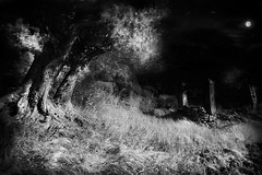 Breeze in a monochrome night (Effe.Effe) Tags: rural countryside well infrared marche ulivi olivetrees pozzo