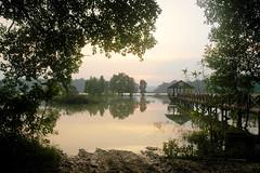 lac chini malaisie (ichauvel) Tags: trees sunset lake asia lac arbres malaysia asie paysage ponton coucherdesoleil malaisie tasikchini