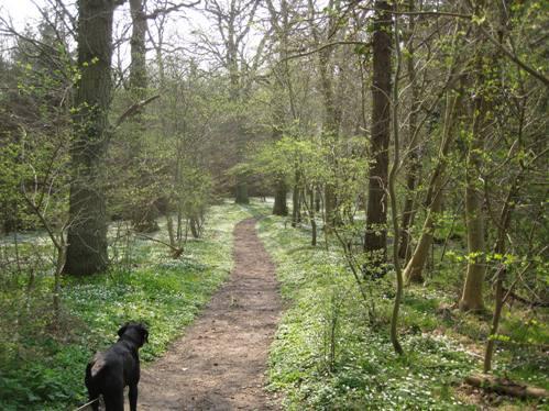 Skovbund i april