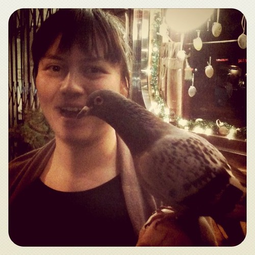 Stella, my manly pigeon friend!