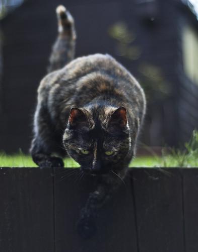 [フリー画像] 動物, 哺乳類, 猫・ネコ, 201104260500