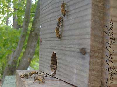 Swarm lure