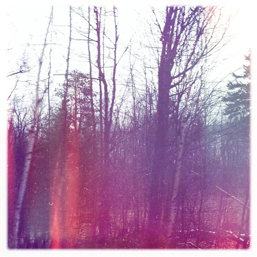 More random forest.