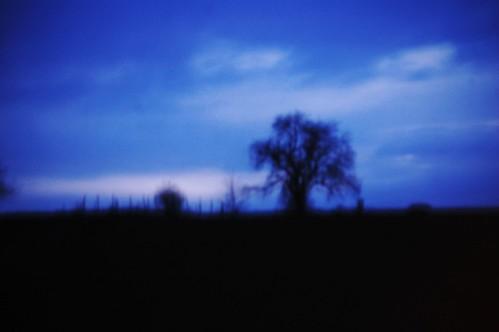 apocalyptic tree