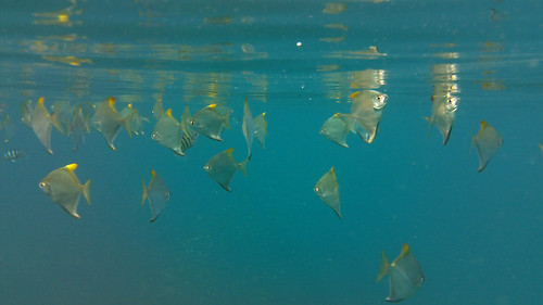 Koh Phangan Salad Beach snorkel