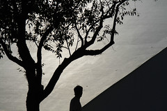 Só/ Alone (Lucille Kanzawa) Tags: shadow tree sãopaulo sombra árvore parquedoibirapuera auditórioibirapuera cursoemídioluisi