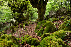 (jonlp) Tags: nature forest landscape natura navarre basoa nafarroa gorriti pagadia paisajea