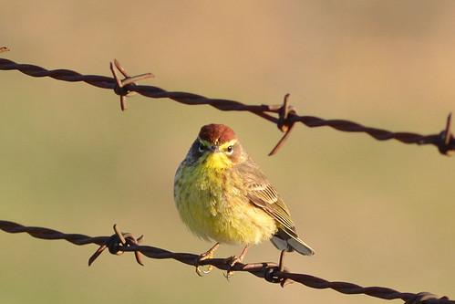 Bird DSC_3225